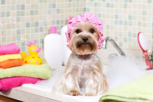 Как приучить собаку к процедурам ухода и грумингу
